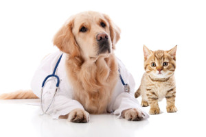 doctor-Dog-cat-300x200.jpg