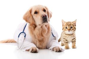 doctor-Dog-cat-300x200.jpg