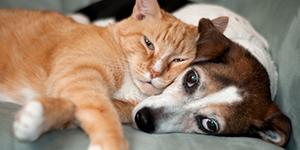 Ветеринарни центрове и кабинети